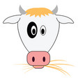 cow eating grass on white background vector image