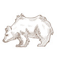 grizzly bear isolated sketch wild forest predator vector image
