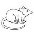 stylized rat vector image vector image