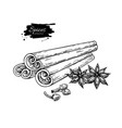 cinnamon stick tied bunch anise star and cloves vector image