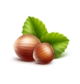 Full Unpeeled Hazelnuts with Leaves on Background vector image vector image