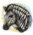 zebra sketchy realistic color portrait zebra vector image vector image