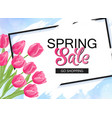 spring sale banner with pink tulips and frame vector image