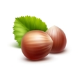 Full Unpeeled Hazelnuts with Leaves Close up vector image vector image