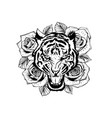roaring tiger head and vector image