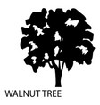 walnut tree icon simple style vector image vector image