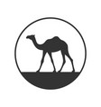 camel sign vector image