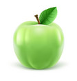 green apple with leaf vector image vector image