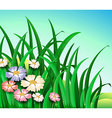 Green plants with colorful flowers vector image vector image