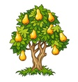 pear tree with ripe fruits vector image vector image