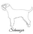 schnauzer outline vector image vector image