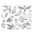 small hummingbird birds barn swallow set or vector image
