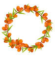 wreath of sea buckthorn berries with place for vector image