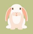rabbit cartoon flat style vector image