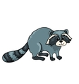 Raccoon isolated on white vector image