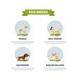 dog breeds banner template poodle dachshund vector image