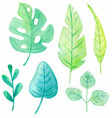 set watercolor tropical leaves vector image vector image