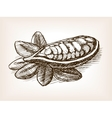 Cocoa bean plant hand drawn sketch style vector image vector image
