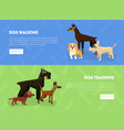 dog walking training banner landing page vector image