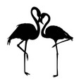 file of flamingo vector image vector image