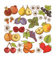 set of colored berry and fruit icons vector image