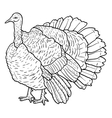 Sketch black turkey on a white background vector image vector image