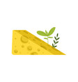 triangular piece of swiss cheese with green herbs vector image vector image
