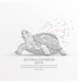 turtle low poly wire frame on white background vector image vector image