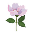 beautiful flower drawing vector image vector image