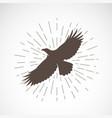 Eagle on white background animal eagle symbol
