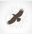 eagle on white background animal symbol vector image vector image