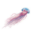 hand drawn sketch jellyfish in color isolated vector image