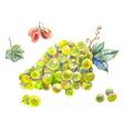 set of grapes watercolor vector image