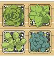 cactus top view in pots vector image vector image
