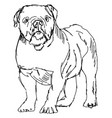 dog drawing on white background vector image vector image