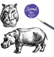 Hand drawn hippo animal Sketch isolated hip vector image vector image