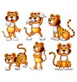Six positions of a tiger vector image