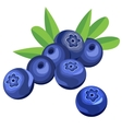 Blueberry berries and leaves vector image