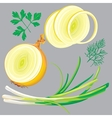 spring onion parsley dill greens vector image vector image