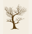 dried tree vector image vector image