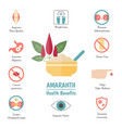 foods infographics amaranthus or amaranth foods vector image vector image