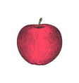 ripe apple hand drawn isolated icon vector image vector image