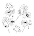 set tropical orchid flowers elements vector image