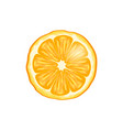 orange fruit slice closeup vector image vector image
