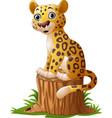 cartoon leopard sitting on tree stump vector image