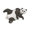 soaring giant panda a wild cute animal falls down vector image vector image