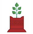 tulsi plant vector image vector image