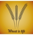 wheat ears on yellow vector image