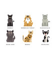 collection different cats breeds bombay vector image