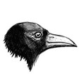 crow head isolated on white background vector image vector image